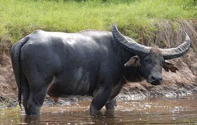 สัตว์ประจำชาติของฟิลิปปินส์