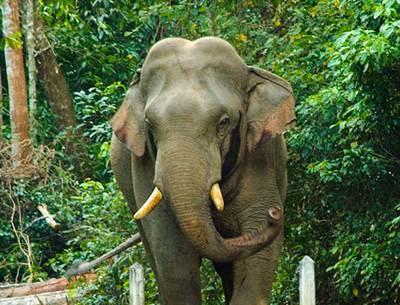 สัตว์ประจำชาติไทย