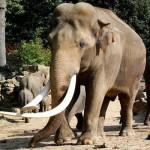 ช้าง สัตว์ประจำชาติไทย