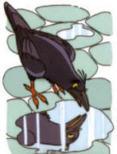 Pigeon002