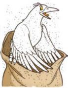 Pigeon004
