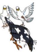 Pigeon006