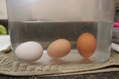 วิธีดูไข่สด