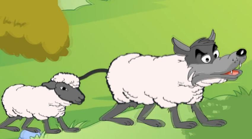 sheep05
