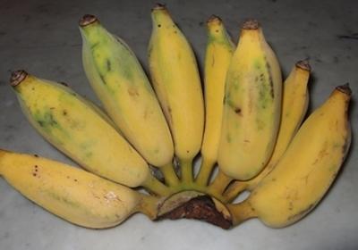 กล้วยน้ำว้า