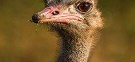 นกที่มีขนาดใหญ่ที่สุดในโลก คือนกอะไร