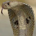 งูในประเทศไทย