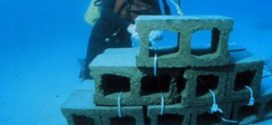 ประการังเทียม คืออะไร มีประโยชน์อย่างไร