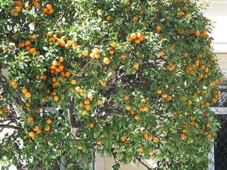 ส้มเขียวหวาน